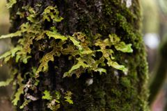 Moss trunk forest background space Stock Photography