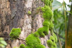 Moss on trunk Stock Image
