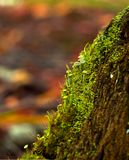 Moss on the trunk of an old tree stock images