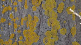 Moss on the trunk of a tree. Close up stock footage