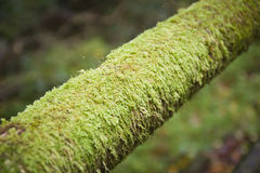 Moss tube Stock Image