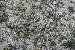 Moss tundra Liggande med en sten i vattnet Royaltyfri Foto