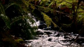 Moss on twigs over a flowing river. Shadows and water along a small river stock video footage