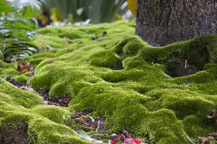 Moss under a tree Stock Image