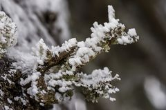 Moss vegetation in winter season. Moss frozen vegetation in winter season Stock Photo