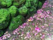 Moss vs Flowers royalty free stock image