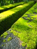 Moss on walkway Stock Image