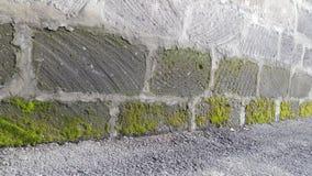 Moss Wall Stock Foto's