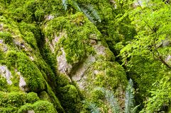 Moss wall. A big rock covered by moss Stock Photo