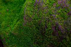Moss on wall. With direct light Royalty Free Stock Photography