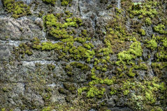 Moss Wall. Moss and algae covered sandstone wall Stock Image