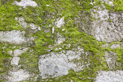 Moss on the wall Royalty Free Stock Images