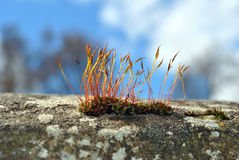 Moss on a wall Royalty Free Stock Photo