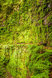 Moss wall with fern nearby Stock Photography