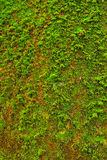 Moss on wall  floor texture background. Stock Photography