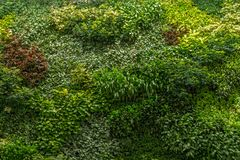 Moss wall, green grass wall decoration design. Pattern texture. Background stock photos