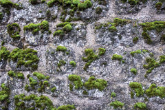 The moss on the wall Stock Image