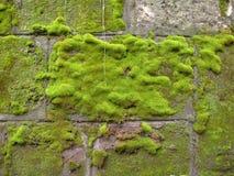 Moss, Wall, Green, Rock, Texture Stock Photos