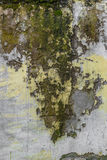 Moss on wall Stock Image