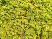 Moss Wall Royalty Free Stock Photos