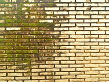 Moss in the wall Stock Images
