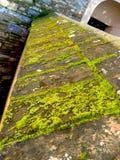 Moss on Wall Stock Photos
