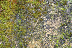 Moss on the wall. Moss on the old wall Stock Photo