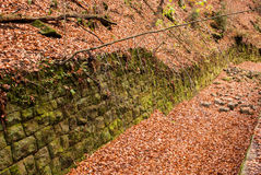 Moss wall, Saxon Switzerland. Saxon Switzerland (German: Sächsische Schweiz) is a hilly climbing area and national park around the Elbe valley south-east of Royalty Free Stock Images