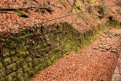 Moss wall, Saxon Switzerland Royalty Free Stock Images