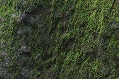 Moss On The Wall verde Fotos de archivo