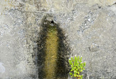 Moss on Wall Stock Photography