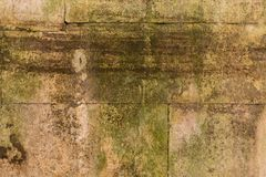 Moss on a wall Royalty Free Stock Photography