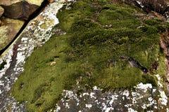 Moss Wallpaper - Aard Royalty-vrije Stock Foto