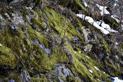 Moss Wallpaper - nature Photo libre de droits