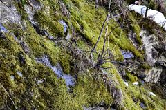 Moss Wallpaper. A photo of a mossy area, somewhere in Romania Stock Image