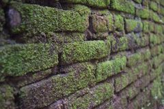 Moss on the walls of old buildings royalty free stock photos