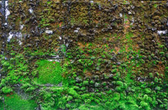 Moss on the walls. Royalty Free Stock Images