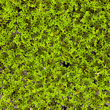 Moss in the water Royalty Free Stock Photos