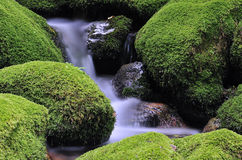 Moss and water. Stock Photography