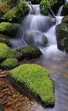 Moss and water. Stock Images