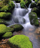 Moss and water. Waterfall water in the river of silk Royalty Free Stock Images