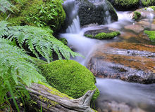 Moss and water. Royalty Free Stock Photography