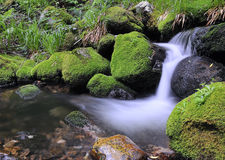 Moss and water. Stock Image
