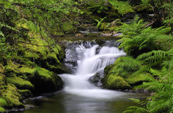 Moss and water. Waterfall water in the river of silk Royalty Free Stock Image