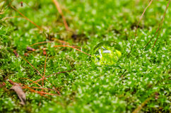 Moss and water drops Stock Images