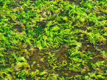 Moss in Water Stock Photos