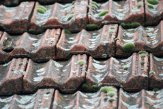 Moss on weathered roof tile , background Stock Photo