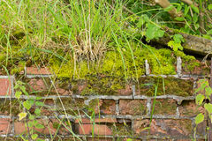 Moss and weed covered crumbling wall background Stock Photography