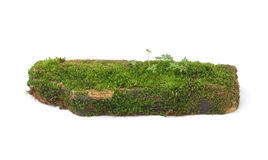 Moss  on white background Stock Photography