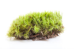 Moss in white background Stock Photos